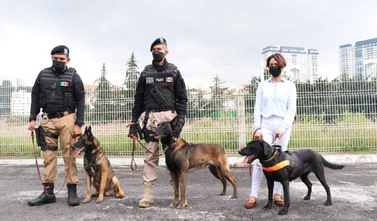 Huixquilucan cuenta con una de las unidades caninas municipales más grandes del Edomex